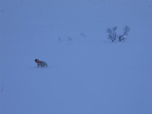 Ronja i vinterstand