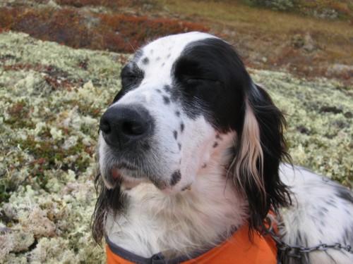 tidligerehunder-Riise 08 6