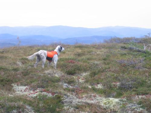 tidligerehunder-Riise Bognheia